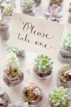 Succulent wedding favors - so darling!                                                                                                                                                                                 More