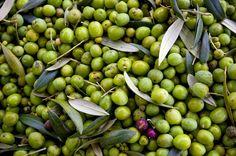 Oregon Olives! #oregonolivemill