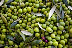 Oregon Olives! #oregonolivemill