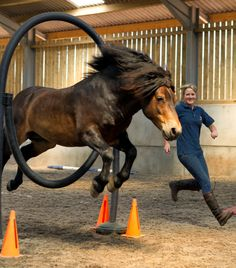 Dawn Westcott and 'Bear' the Exmoor Pony stallion put on a liberty and agility demonstration. ©2013-Roderick-Smith.