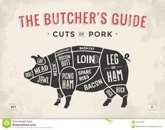 Cut Of Meat Set. Poster Butcher Diagram, Scheme And Guide - Pork. Vintage Typographic Hand-drawn. Vector Illustration. Stock Vector - Image: 65767406