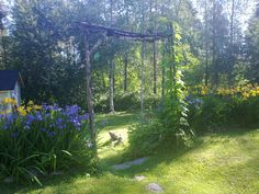 Oma puutarha kesällä 2012