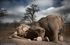 """Sleeping Elephant"" by Leonardi Ranggana"