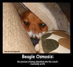 Beagle Osmosis