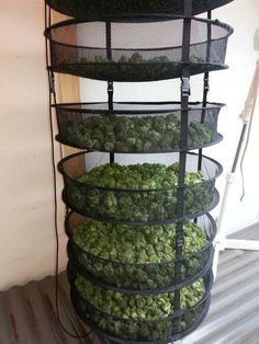 Drying rack that breaths for Cannabis