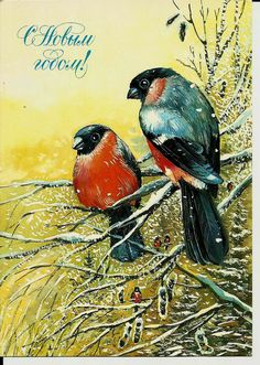 Bullfinch - Birds - Vintage Russian Postcard -Happy New Year by LucyMarket, $4.99