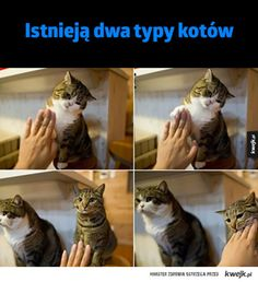 Kittens So Cute - Funny Cats Cute Kittens, Cats And Kittens, Cute Funny Animals, Funny Cats, Cat Vitamins, Gatos Cool, Friends Laughing, Copy Cat Chic, Cat Memes