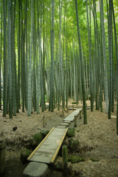 Bamboo Forest - I had one of these in Louisiana and loved it!   one shoot will grow sooo fast!