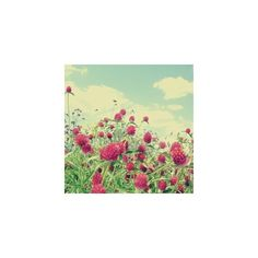 Into the Clover : papernstitch : an exhibition space for fine art,... ($10) ❤ liked on Polyvore featuring backgrounds, flowers, pictures, photos and fondos