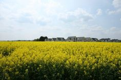 Wisconsin: 8 of 72 Counties Have Increased 2013 USDA Rural Housing Income Limits