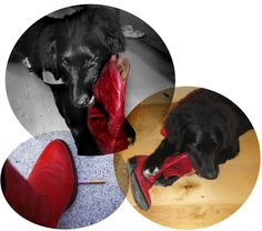 6 months old...with my red cowboy boots!