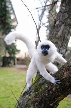 Poseable art doll, monkey Trevor by FellKunst on DeviantArt Needle Felted Animals, Felt Animals, Animals And Pets, Monkey Art, Pet Monkey, Cute Fantasy Creatures, Beautiful Creatures, Super Cute Animals, Cute Baby Animals
