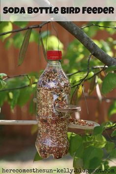 recycling craft ideas for bird feeder designs