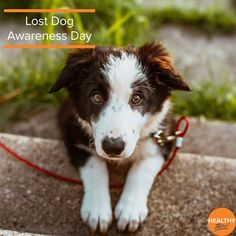 Today is #LostDogAwarenessDay and we've got some helpful tips for keeping your pet safe year round, especially with dog theft incidents on the rise: 🐶Don't be tempted to leave your pet tied up outside a shop or in the car 🐶Ensure that all microchip details are up to date 🐶Make sure your dog comes back when you call Click the link to find out more about Healthy Pets pet anti-theft tips or to get a quote for your pup! #dogs #pets #lostdogs #HealthyPetsInsurance #NationalPetMonth I Love Dogs, Cute Dogs, Dresser, Dog Training School, Mal Humor, Dangerous Dogs, Buzzfeed Animals, Healthy Pets, Losing A Dog