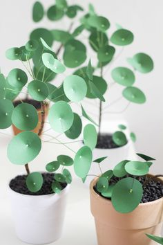 Five months after my firstpaper pilea perperomioides (a.k.a. Chinese money  plant), I've had so much fun making many more. I thought it was time for an  update on the DIY!Here you will find a tutorial for a more realistic  interpretation of the popular plant and more detailed instructions.