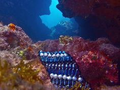 """Nautica Blue"" Pearl Bracelet from Musesa Collection in an amazing Mediterranean under-water photo-shoot. www.musesa.com"