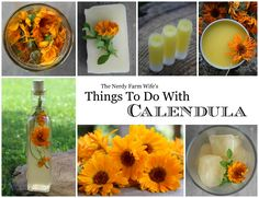 Things To Do With Calendula (FREE eBook from The Nerdy Farm Wife)