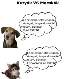 Funny pictures about Difference between Cats and Dogs. Oh, and cool pics about Difference between Cats and Dogs. Also, Difference between Cats and Dogs photos. Funny Cats And Dogs, Funny Animals, Funniest Animals, Hate Cats, Adorable Animals, I Love Dogs, Puppy Love, Dog Pictures, Funny Pictures