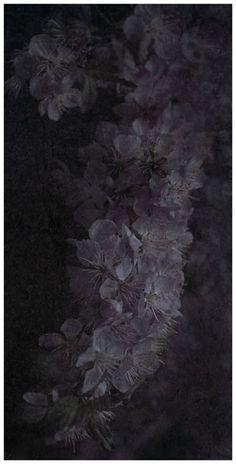 "Flowers in Neutral Moment-2015 "" Prunus tomentosa (Yusura Ume) "" Archival pigment print Printed on cotton rag fine art paper Photo by Soichi Oshika"