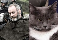 They have the exact same facial expression! But Ser Whiskers could care less of onions. Game of Thrones Characters as Cats