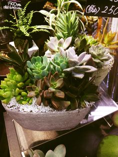 The planting of pretty succulents @Hanadokei Tokyo