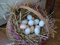 Chicken Scratch Poultry - Fertile Hatching Eggs (Marans, BLR Wyandotte, Olive Egger, etc.)