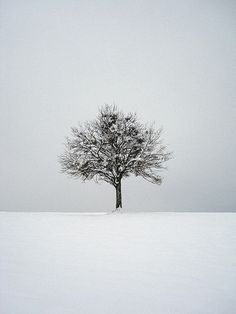 Winter Photography: 12 Examples of How to Photograph the Cold Season | PictureCorrect
