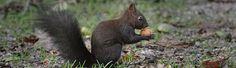 Park, Kangaroo, Animals, Types Of Animals, Recovery, Baby Bjorn, Animaux, Parks, Animal