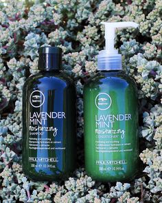 With summer comes parched, sun-damaged hair. Experience a #TeaTreeSummerSplash with the hydrating Lavender Mint Moisturizing Shampoo and Conditioner. #TeaTreeHairCare Stop Hair Loss, Prevent Hair Loss, Good Hair Day, Great Hair, Mint Shampoo, Neck Wrinkles, Hair Growth Treatment, Moisturizing Shampoo, Paul Mitchell