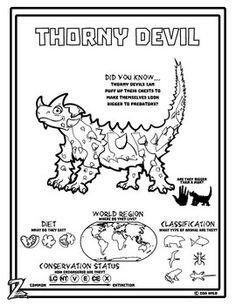 The thorny dragon or thorny devil (Moloch horridus). Photo