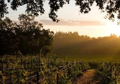 Healdsburg California- can't wait for another great wine country trip.
