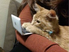 Cat with his own mini computer! :)