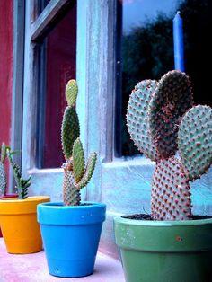 Vasinhos coloridos valorizam qualquer cacto.