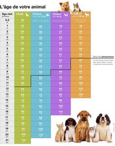 Quel est l'âge réel de nos chiens et de nos chats ?