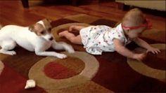 Este cachorro ensinando o bebê a engatinhar é tão bonitinho que chega a doer