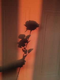 flowers and everything floral Aesthetic Roses, Orange Aesthetic, Aesthetic Vintage, Aesthetic Photo, Aesthetic Pictures, Aesthetic Backgrounds, Aesthetic Iphone Wallpaper, Aesthetic Wallpapers, Shadow Pictures