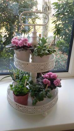 Leuke mini plantjes.