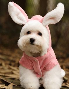 I've got the puppy, now I have to get the bunnysuit! An absolutely adorable way to give my nieces and nephews a little Easter giggle. My dog loves wearing clothes, too!