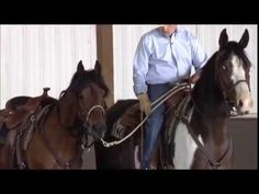 Watch this video from Charles Wilhelm Training on how to pony your horse Horse Training Tips, Horse Tips, Farm Animals, Cute Animals, Horse Behavior, Riding Stables, Horse Exercises, Pony Horse, All About Horses
