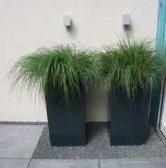 love the grass in the geometric planter