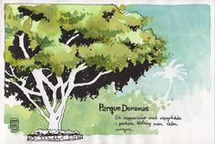 Parque Doramas -- beautiful beautiful tree...love the background suggestion too.  wow.  again by Nina Johansson