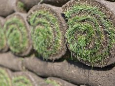 The lawn care experts at DIY Network share their best tips for laying sod in your yard.