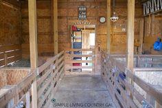 setting up a goat barn