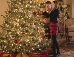 Hanging lights on your Christmas tree.
