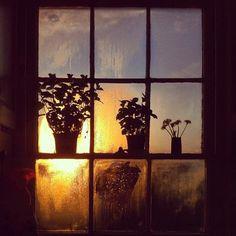 Kitty Wheeler Shaw on Instagram http://instagram.com/kittywshaw #window #sunset #plant #silhouette #photography