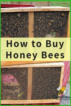 Honey Bees for Sale – How to Buy Bees Explore the options for how to buy honey bees. Thousands of new honey bee colonies are started every year. Learn how to buy your first. Honey Bees For Sale, Buy Honey, How To Start Beekeeping, Beekeeping For Beginners, Drone Bee, Bee Hive Plans, Raising Bees, Raising Ducks, Bee Boxes