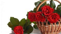 Beautiful Red Roses, Beautiful Flowers Wallpapers, Amazing Flowers, Flowers Nature, Floral Flowers, Red Flowers, Rose Basket, Flower Basket, Best Online Flowers