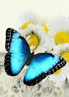 Morpho Butterfly by Heike Hultsch