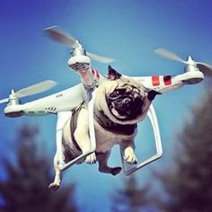 OMG! This pug must be shocked. Maybe it's photoshopped?!