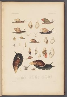 12 (Atlas) - United States Exploring Expedition. - Biodiversity Heritage Library